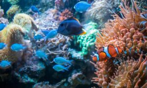 koralowce i błazenek
